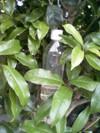 P1000112